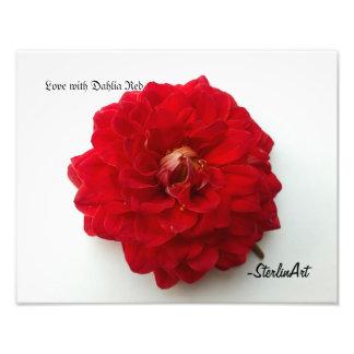 Foto Amor com vermelho da dália