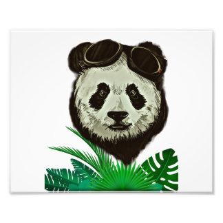 Foto Animal do urso de panda do hipster
