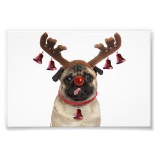 Foto Antlers do Pug - pug do Natal - Feliz Natal