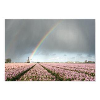 Foto Arco-íris sobre jacintos e um moinho de vento em