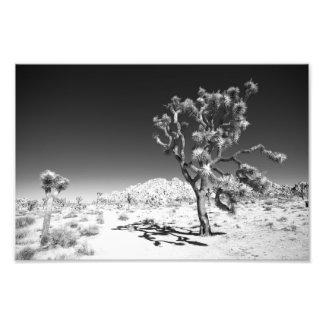 Foto Árvore de Joshua
