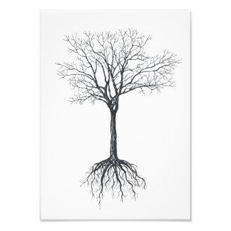 Foto Árvore sem folhas