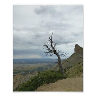 Foto Árvore solitária em Mesa Verde