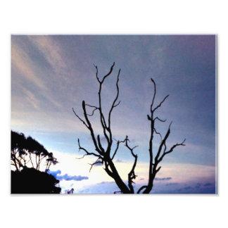 Foto Árvore solitária na costa