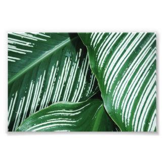 Foto As folhas do verde com branco listram o close up
