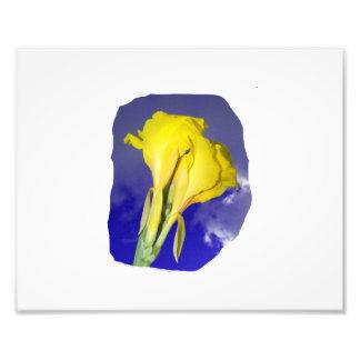 Foto azul escuro do céu de duas flores amarelas