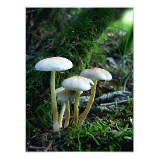 Foto Bebês da floresta