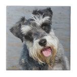 Foto bonita bonito do cão diminuto do Schnauzer Azulejos De Cerâmica