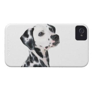 Foto bonita do cão Dalmatian, presente Capa Para iPhone 4 Case-Mate