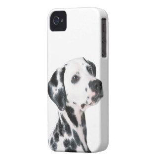 Foto bonita do cão Dalmatian, presente Capinha iPhone 4