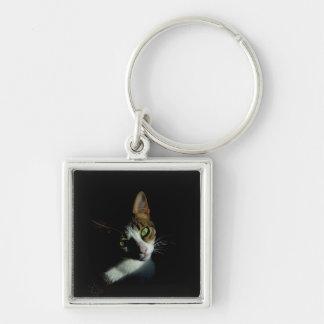Foto bonita do gato chaveiro quadrado na cor prata