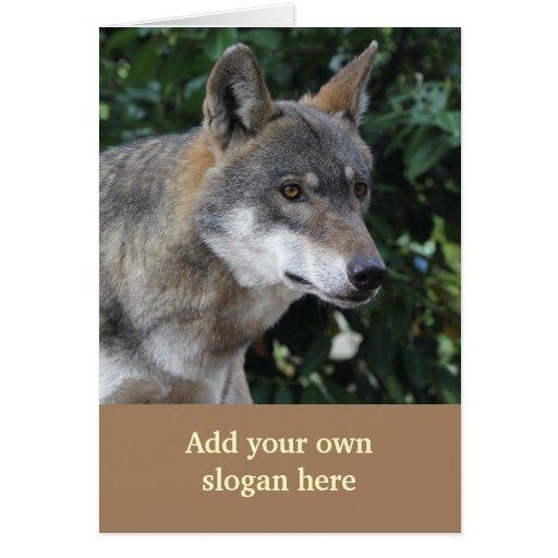 Foto bonita do lobo para personalizar-se cartões