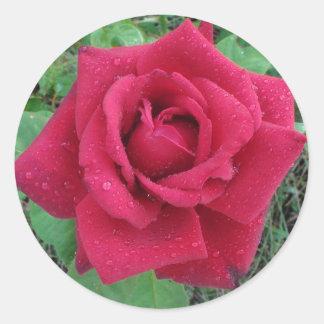 Foto bonita uma rosa vermelha com etiqueta dos adesivo
