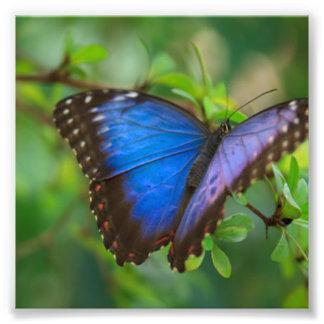 Foto Borboleta azul