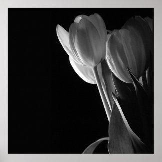 Foto branca das tulipas no fundo preto poster