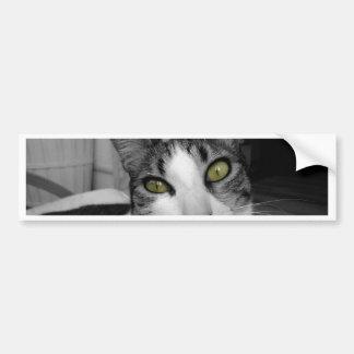 Foto branca preta do gato adesivo para carro