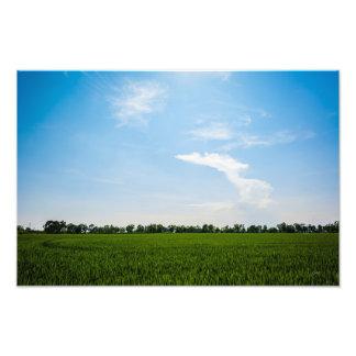 Foto Campo do arroz no verão em um dia ensolarado