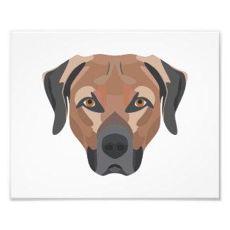 Foto Cão Brown Labrador da ilustração
