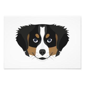 Foto Cão de montanha de Bernese da ilustração