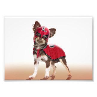 Foto Cão do libre de Lucha, chihuahua engraçada,