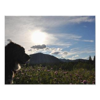 Foto Cão em flores da montanha
