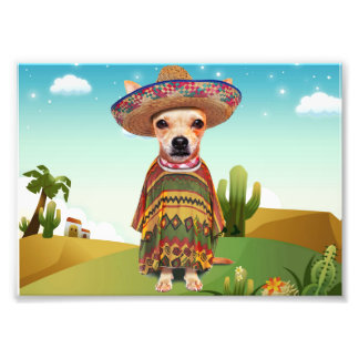 Foto Cão mexicano, chihuahua