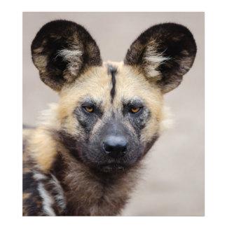 Foto Cão selvagem africano