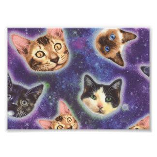 Foto cara do gato - gato - gatos engraçados - espaço do