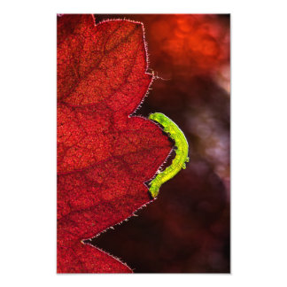 Foto Caterpillar