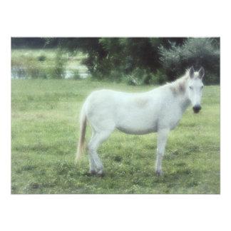Foto Cavalo branco