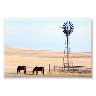 Foto Cavalos & impressão do moinho de vento