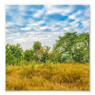 Foto Cena tropical da paisagem do prado, Guayaquil