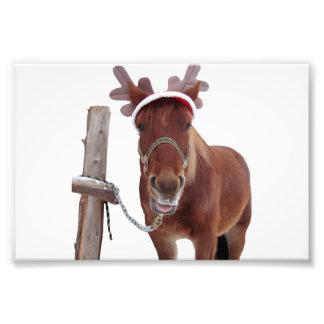 Foto Cervos do cavalo - cavalo do Natal - cavalo