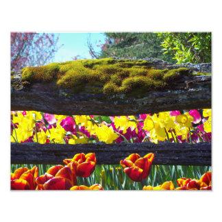 Foto Choral floral