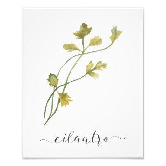 Foto Cilantro botânico do impressão da erva da aguarela