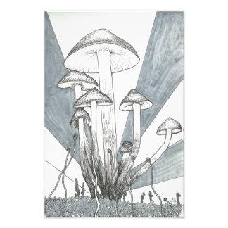 Foto Cobertura do cogumelo