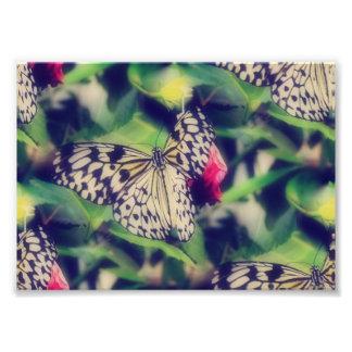 Foto Colagem da borboleta