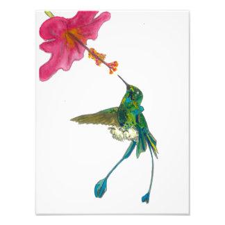 Foto Colibri com hibiscus