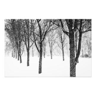 Foto como eu tomo partido das árvores