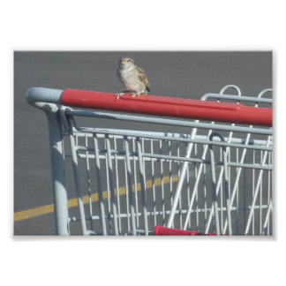 Foto Compra do pássaro