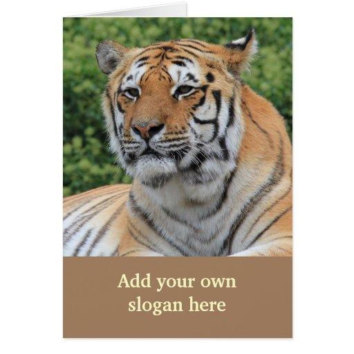 Foto considerável do tigre para personalizar-se cartões