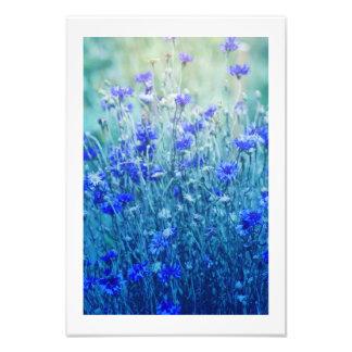 Foto Cornflowers