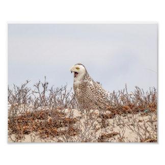 Foto coruja 10x8 nevado que senta-se na praia