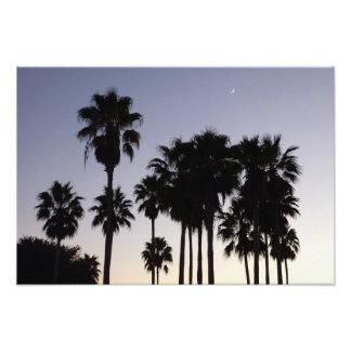 Foto Crepúsculo com cena tropical das palmeiras