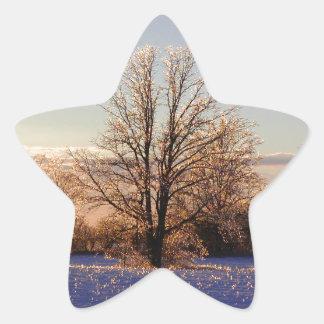 Foto da árvore gelo-coberta adesito estrela