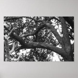 Foto da árvore preto e branco pôster