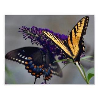 Foto da borboleta