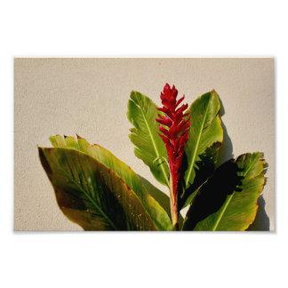 Foto da flor do gengibre