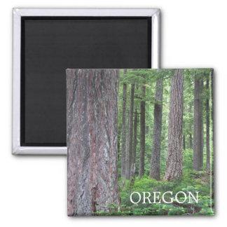 Foto da floresta de Oregon Ímã Quadrado