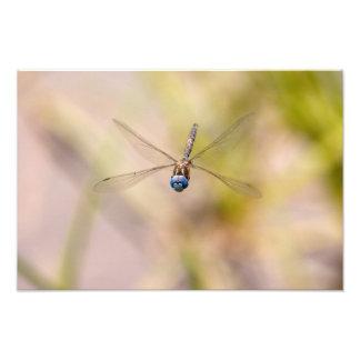 Foto da libélula em vôo impressão de foto
